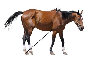 horsewhitebg