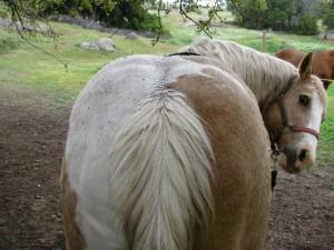 horsebehind