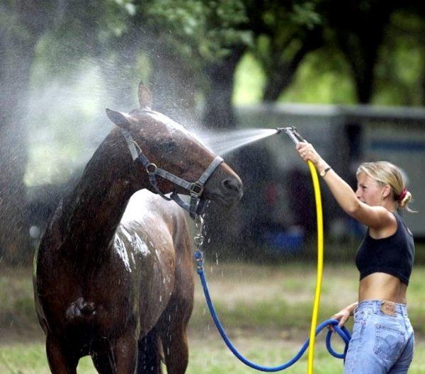 Hot Days Hot Horses
