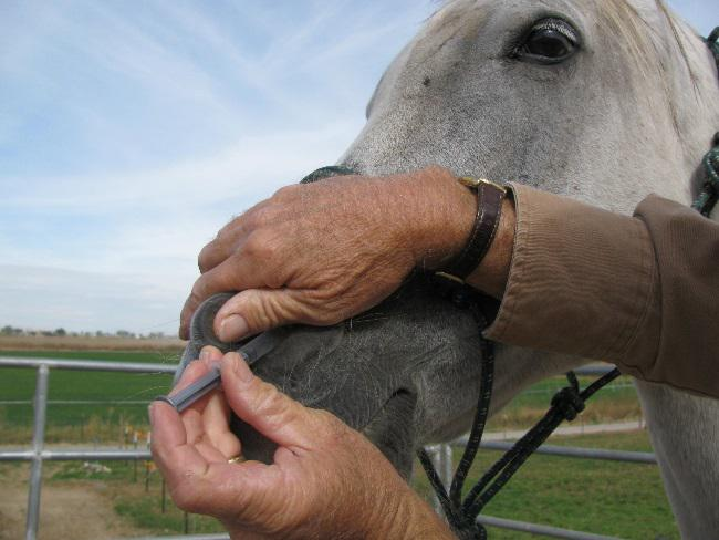What should I do for my horse with a cough and/or runnynose?